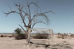 Into the American Desert Series no. 20 by Jett Johnson